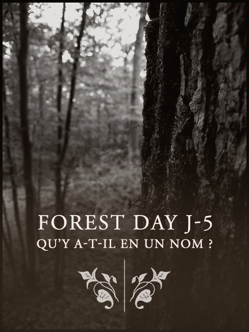 lorliaswood_forestday_j-5_nom