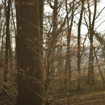 Le jour des Bois : date et thématique