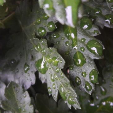 Vent d'automne, pluie de mots