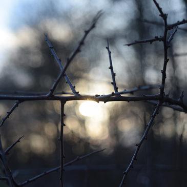 «The Botanist» : découvrez l'arboretum d'Amelia Boar