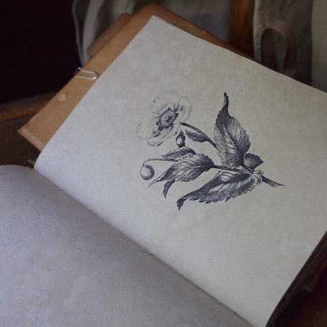 lorliaswood_botanicalspecimen_bookn3_11