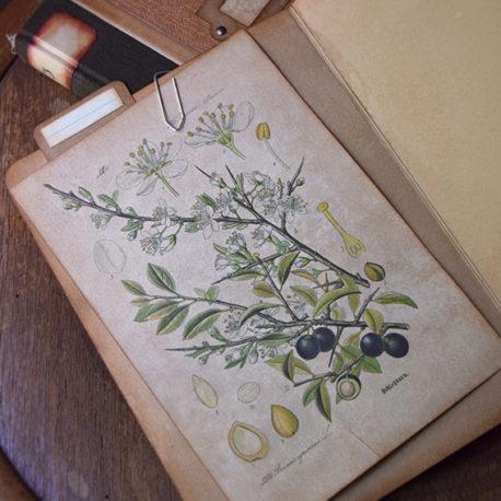 lorliaswood_botanicalspecimen_bookn3_6